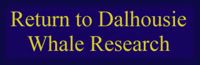 Return to Dalhousie Whale Research